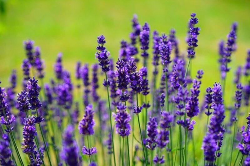 W stresie sięgnij po wysokiej jakości zioła!